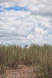 Vache cachée Photo libre de droits