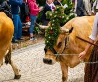 Vache décorée d'une coiffe photo stock