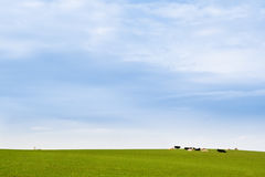 Vache dans le pré avec l'église blanche et le ciel bleu Photographie stock
