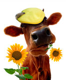 Vache drôle Image libre de droits