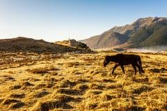 Vache en nature Photo libre de droits