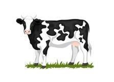 Vache enduite raccordée noire et blanche du Holstein illustration stock