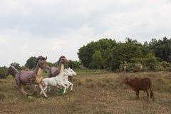 Vache et chevaux Photos stock