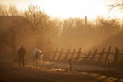 Vache et homme au lever de soleil Photos stock