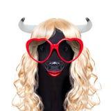 Vache idiote folle drôle à veau de carnaval Image libre de droits