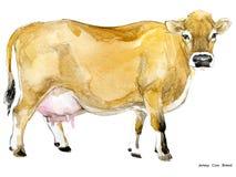 Vache Illustration d'aquarelle de vache Race de vache à traite Race de vache à débardeur illustration stock
