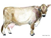 Vache Illustration d'aquarelle de vache Race de vache à traite Vache à Suisse de Brown illustration stock