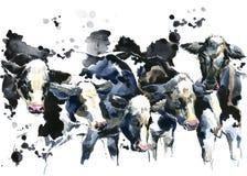 Vache laitière sur l'illustration d'aquarelle de champ Photographie stock libre de droits
