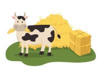 Vache mangeant le foin Photographie stock