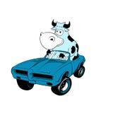Vache pilotant une mascotte de véhicule Photographie stock libre de droits