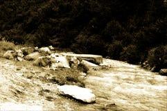 Vache près de rivière, vieille photo Images libres de droits
