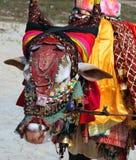 Vache sacrée à Indien sur la plage, GOA Photographie stock libre de droits