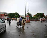Vache se tenant au milieu de l'intersection dans l'Inde Photo libre de droits