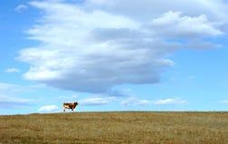 Vache se tenant dans le domaine d'automne Images libres de droits