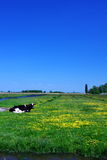Vache sur la zone verte Image stock