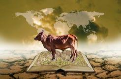 Vache sur le livre ouvert à la terre sèche avec le recouvrement de carte du monde sur le ciel, la connaissance d'agriculture image libre de droits