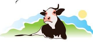Vache sur le pâturage Images libres de droits