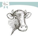Vache sur un backgraund de wihte Photo libre de droits