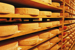 Vacherin Fribourgeois cheese. In a cellar, Switzerland Stock Photography