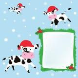 Vaches à Noël Photo stock