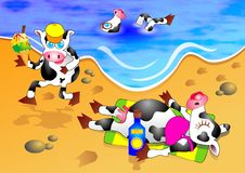 Vaches à plage Photos stock