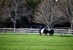 Vaches à une ferme image libre de droits