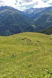 Vaches dans les prés sur le Grossglockner Images libres de droits