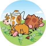 Vaches dans un pré Photo stock