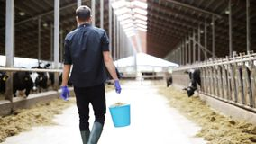 Vaches et homme avec le seau de foin marchant à la ferme banque de vidéos