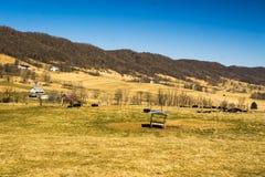 Vaches frôlant en vallée bleue d'herbe photographie stock libre de droits