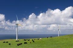 Vaches frôlant parmi des turbines de vent Photographie stock libre de droits
