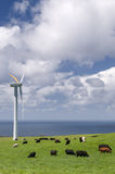Vaches frôlant parmi des turbines de vent Photos libres de droits