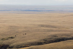 Vaches lointaines frôlant l'immense terre de ranch Photos stock