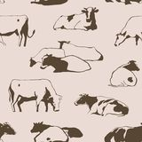 Vaches sans couture Images libres de droits
