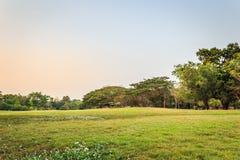 Vachirabenjatas Park (Rot Fai Park). Bangkok Thailand. green nature on public park with blue sky on sunset Stock Photo