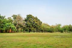Vachirabenjatas Park (Rot Fai Park). Bangkok Thailand. green nature on public park with blue sky on sunset Stock Photos
