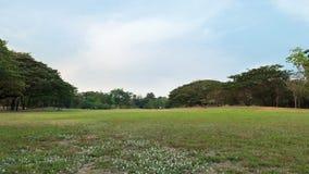 Vachirabenjatas Park (Rot Fai Park). Bangkok Thailand. green nature on public park with blue sky on sunset Royalty Free Stock Photography