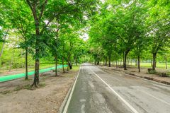 Vachirabenjatus Park or Train park in Bangkok Thailand. Stock Photography