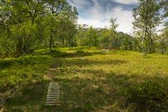 Vaciamiento en el bosque Imagen de archivo libre de regalías