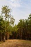 Vaciamiento en el bosque del otoño Foto de archivo libre de regalías