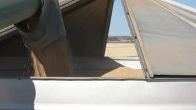 Vaciar la cosecha de la cebada en un silo metrajes