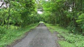 Vacie el camino rural alineado con el paisaje de los árboles que indican por el viento