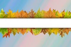Vacie la línea blanca para la tipografía feliz de la acción de gracias en las hojas de otoño Fotos de archivo