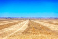 Vacie los campos amarillos y el cielo azul brillante en Australia Imagen de archivo