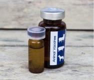 Vacina animal para que o animal cure a pele animal Imagem de Stock