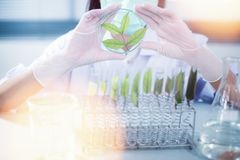 Vacina verde da descoberta da pesquisa do fitoterapia no laboratório de ciência foto de stock royalty free