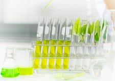Vacina verde da descoberta da pesquisa do fitoterapia no laboratório de ciência fotos de stock royalty free