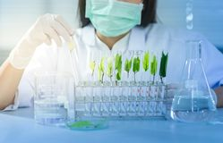 Vacina verde da descoberta da pesquisa do fitoterapia no laboratório de ciência imagem de stock
