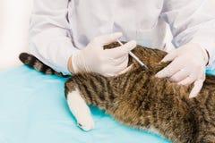 Vacuna del gato Fotografía de archivo libre de regalías