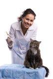 Vacunación. El veterinario tiene gato del examen médico Imagen de archivo libre de regalías